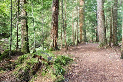 Forest path at Reelig Glen in Scotland.