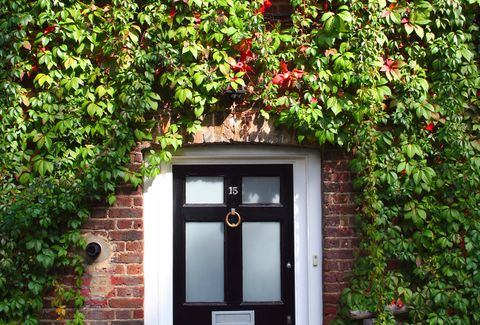 England, Londonfront door with climbing plants