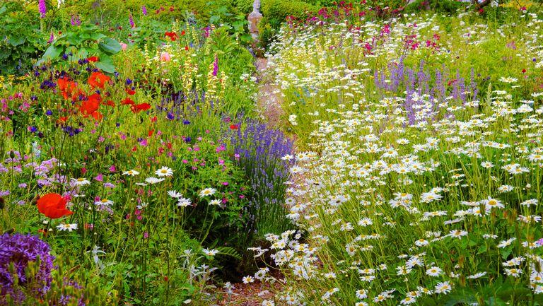 indoors garden thoughts