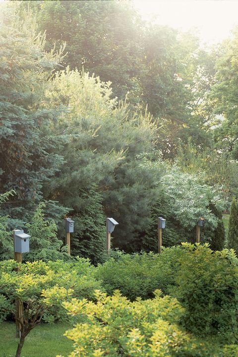 15 Best English Garden Design Ideas How To Make An English