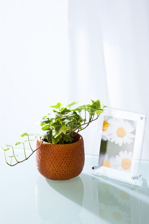 Ivy and photo frames