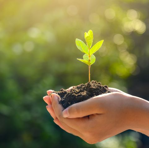 environment earth day in the hands of trees growing seedlings bokeh green background female hand holding tree on nature field grass forest conservation concept