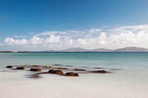 Seaweed On The Shore On Eilogarry Beach; Isle Of Barra, Scotland