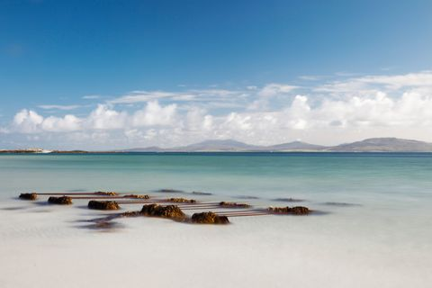 Seaweed On The Shore On Eilogarry Beach; Isle Of Barra, Scotland