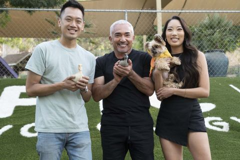cesar millan on the dog psychology center lawn in santa clarita, ca, with jason, christine, their dog ducky and some ducklings national geographic