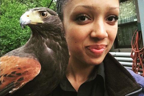Bird, Golden eagle, Falcon, Beak, Kite, Bird of prey, Hawk, Sharp shinned Hawk, Accipitriformes, Falconiformes,