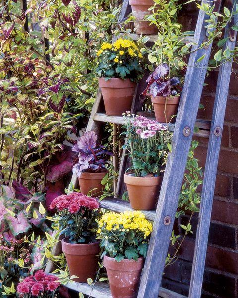 macetas con flores en una escalera de madera