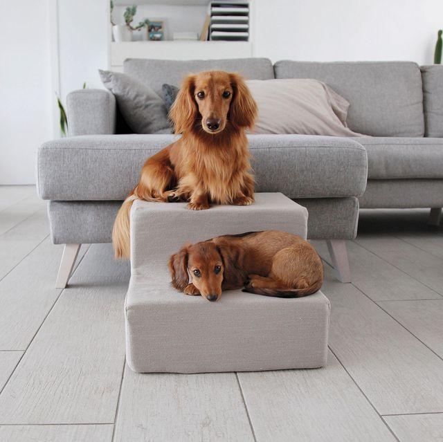 escalera para perros en el salón