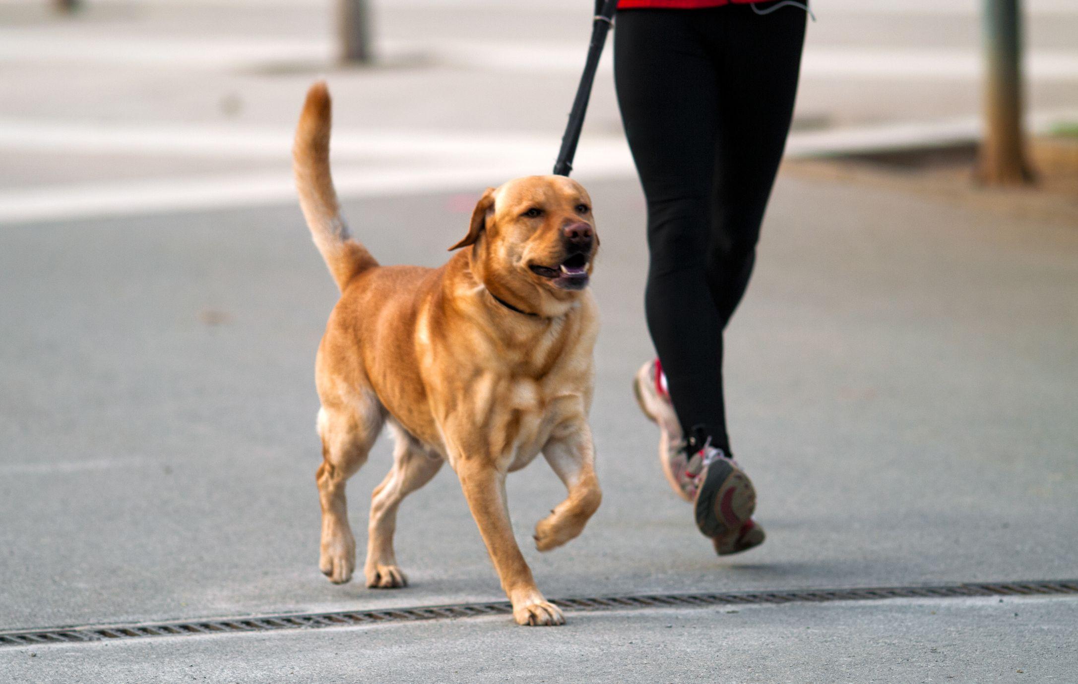 Il cane è il miglior allenatore dell'uomo