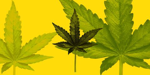 How Close Is The UK To Legalising Cannabis?