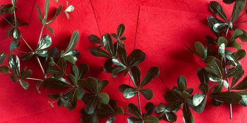 green plants on a red background