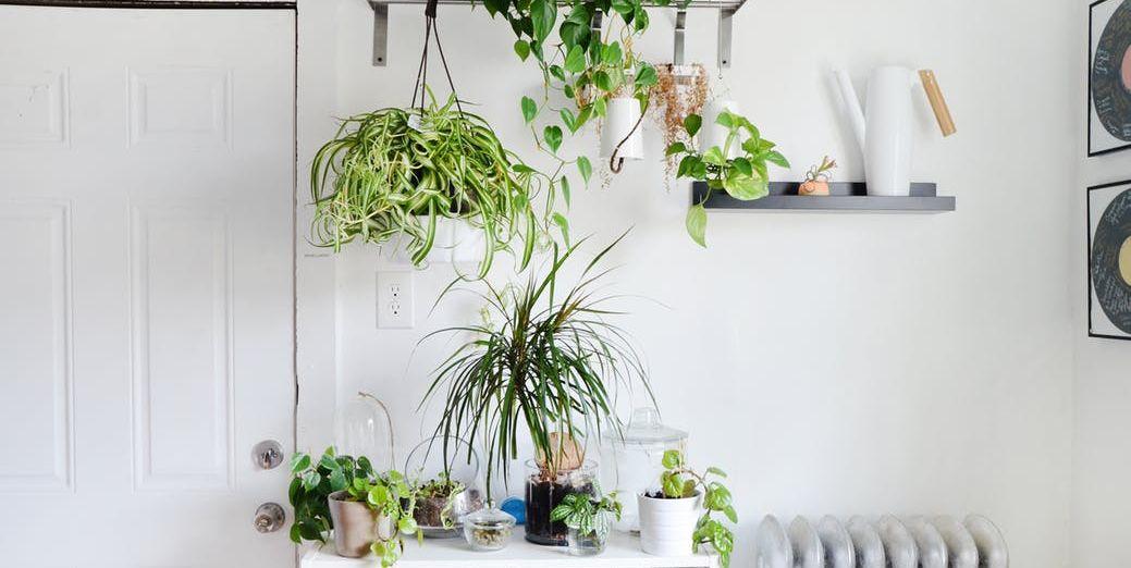 10 plantas que incluso el más torpe puede mantener vivas