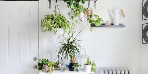 plantas resistentes decorar la casa