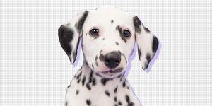 Estee Lauder Ban Animal testing
