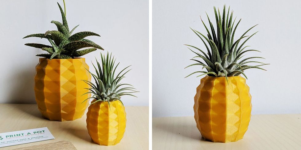 This Adorable Pineapple Holder Comes With an Air Plant to Look Like the Real Thing