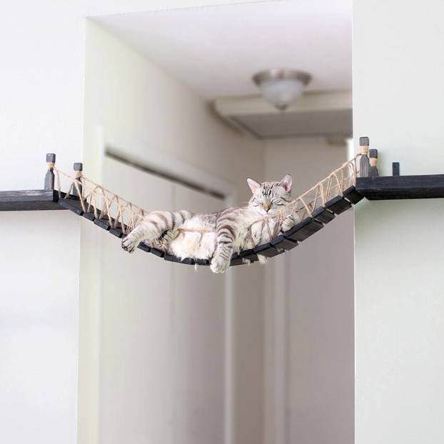 The Indiana Jones Cat Bridge