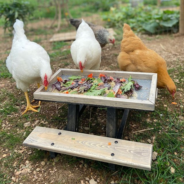 etsy chicknic chicken picnic table