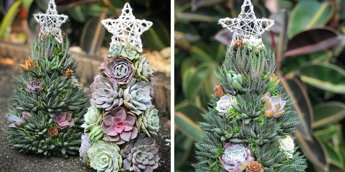 these succulent christmas trees will add a festive touch to your holiday decor these succulent christmas trees will add a festive touch to your holiday decor