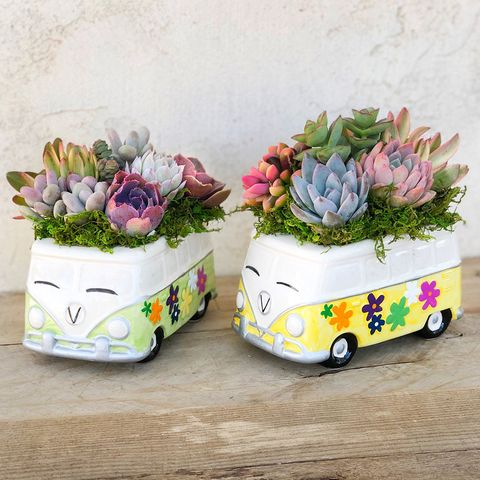 volkswagen bus succulent planters