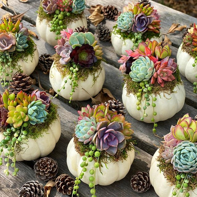 white succulent pumpkins from etsy