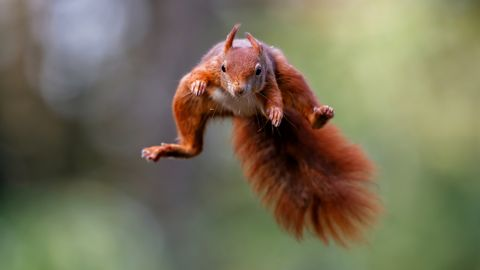 10 dingen die je nog niet wist over eekhoorns