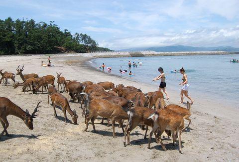 阿久根大島 小鹿沙灘