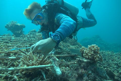 Underwater, Reef, Marine biology, Coral, Coral reef, Natural environment, Scuba diving, Organism, Underwater diving, Water,