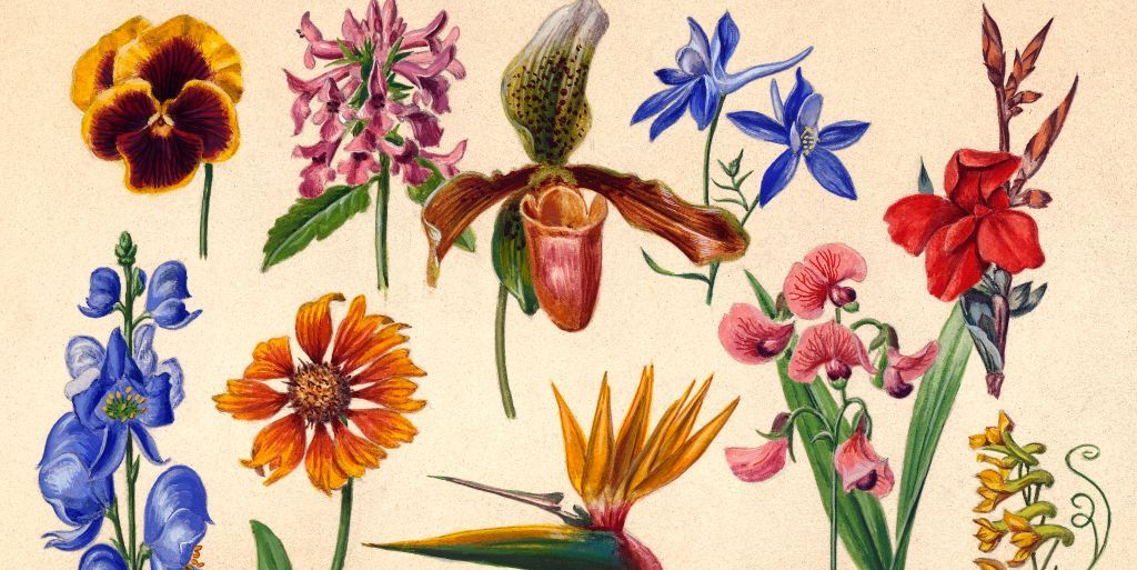 Gardening Ideas cover image