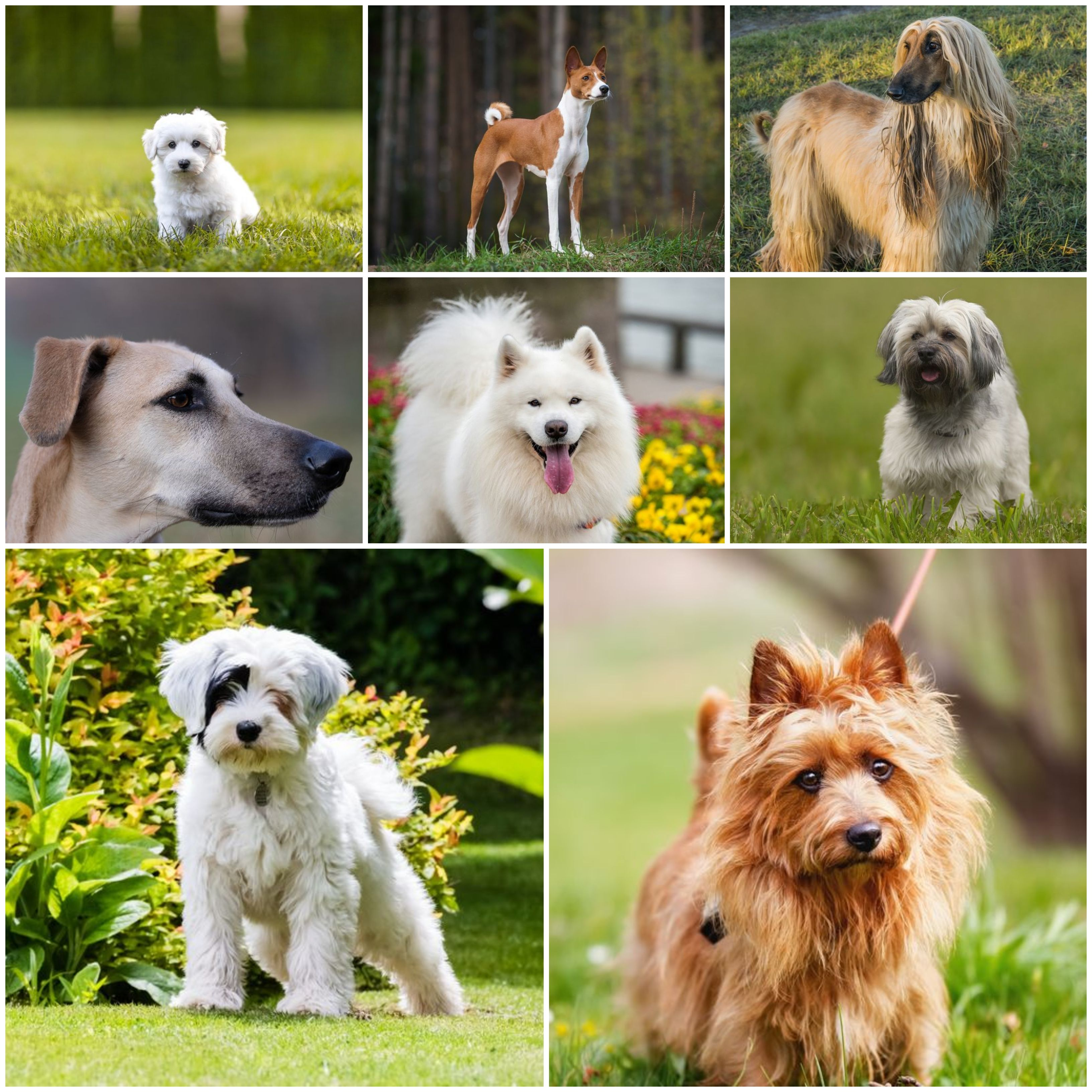 8 Dog Breeds With Exotic Origins