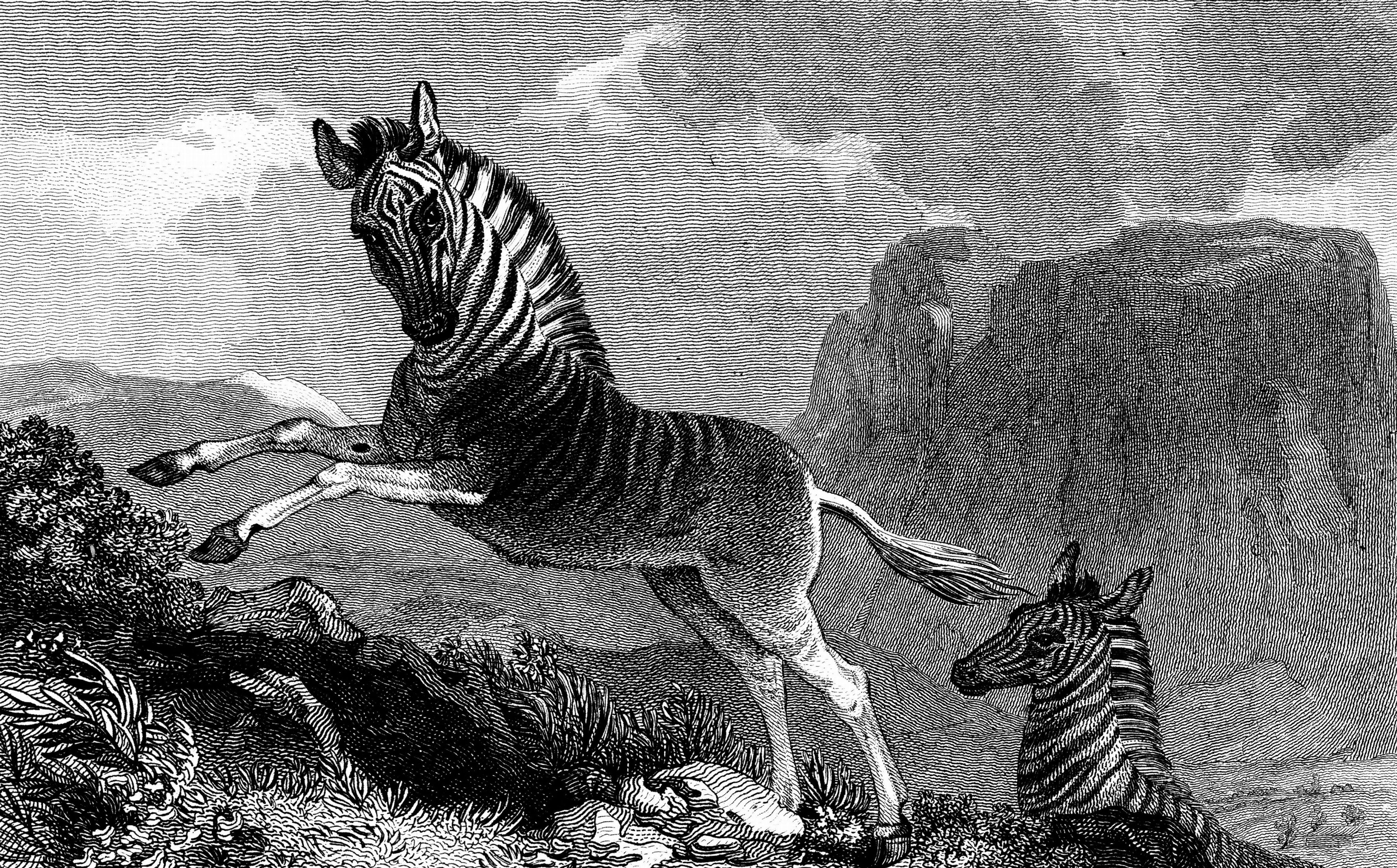 Extinct Animals 2019   List of Extinct Species