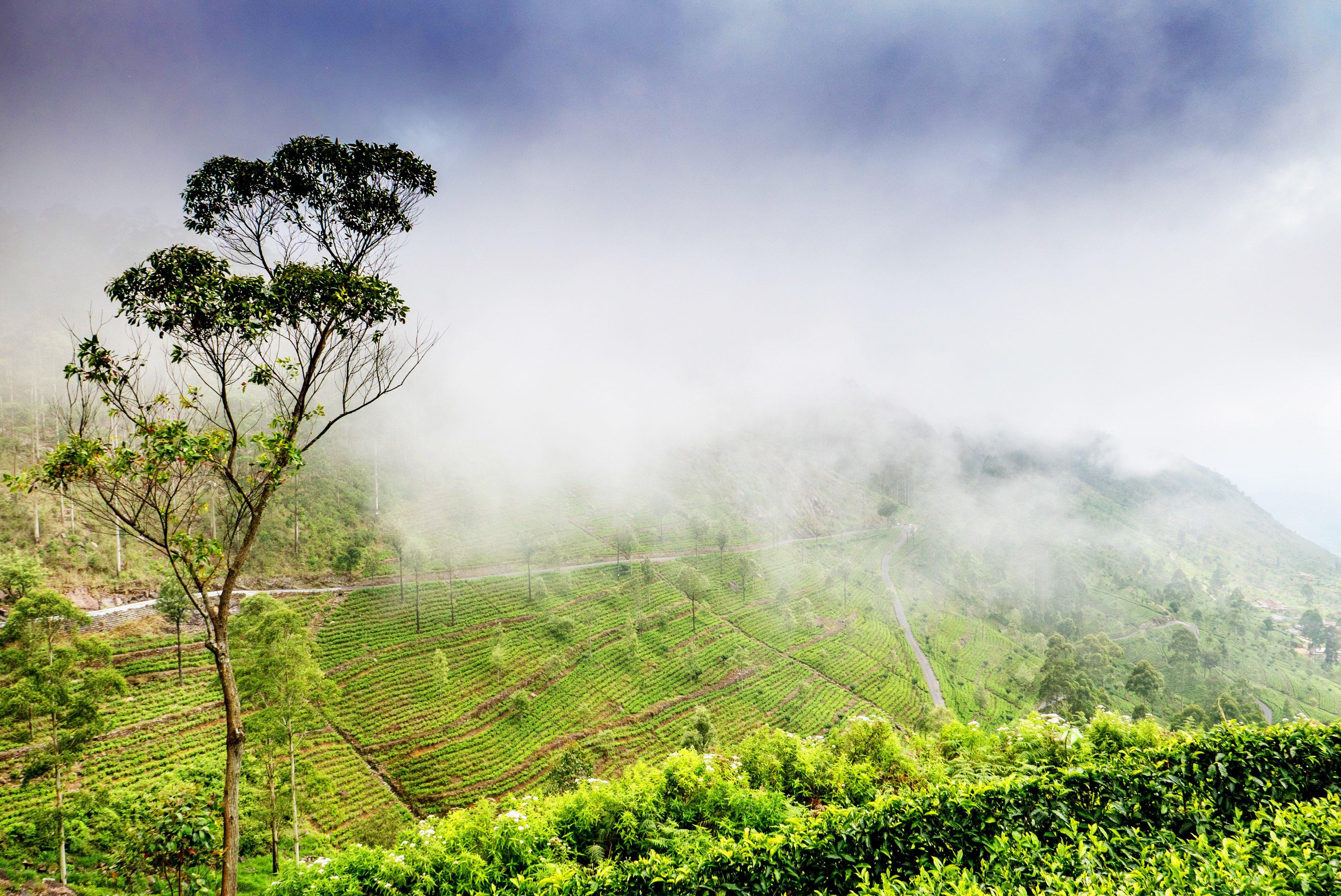 A thrill-seeking culinary ride through Sri Lanka