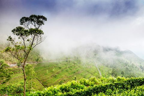 Vegetation, Nature, Green, Hill station, Sky, Natural landscape, Atmospheric phenomenon, Plantation, Tree, Morning,