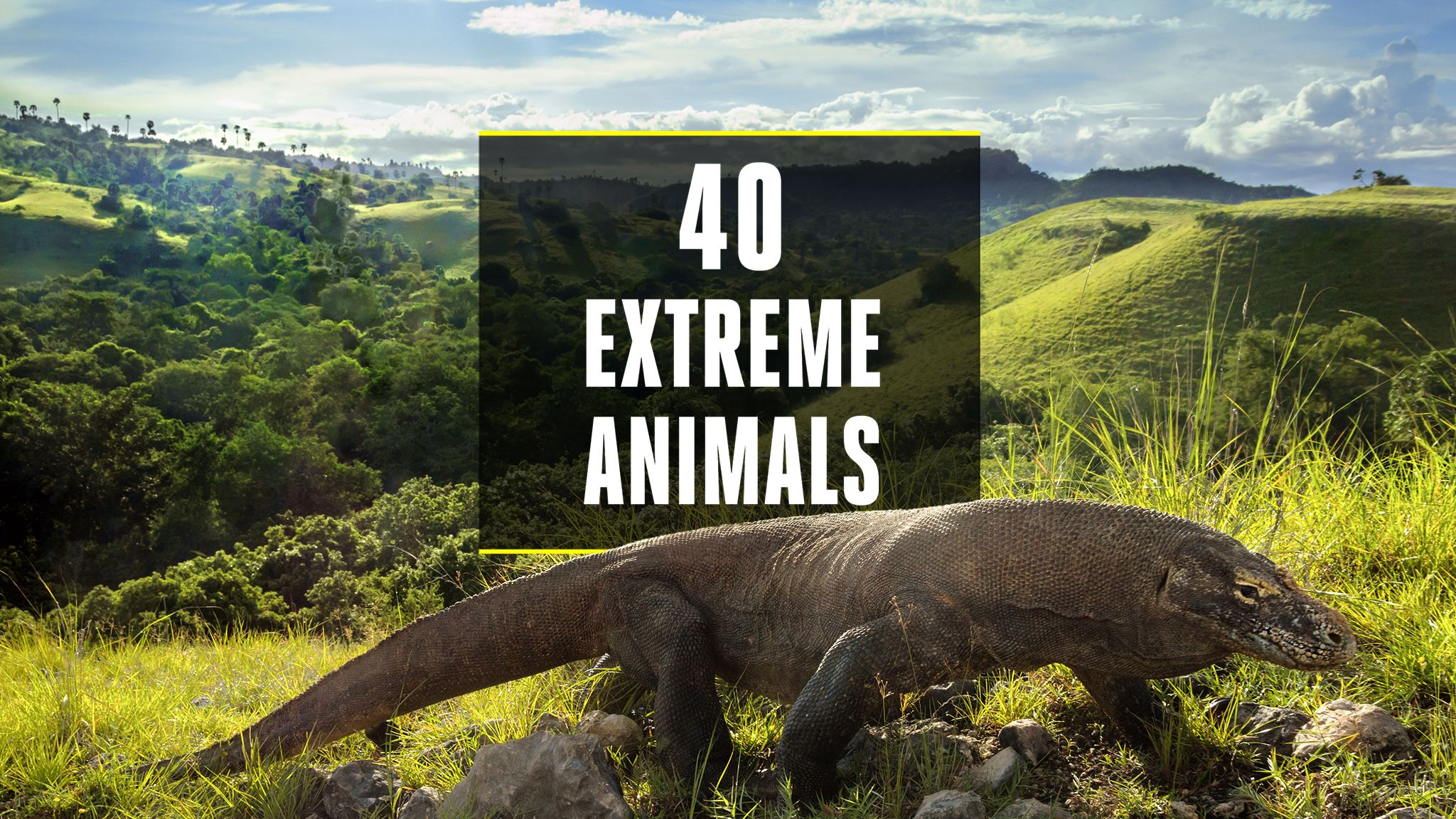 The 40 Most Extreme Animals on the Planet