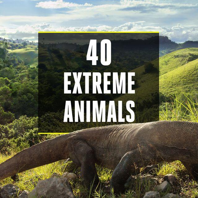 Nature, Komodo dragon, Natural landscape, Varanidae, Nature reserve, Wilderness, Terrestrial animal, Wildlife, Adaptation, National park,