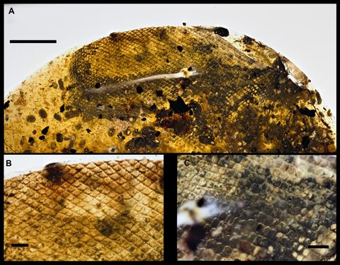 ancient snakeskin