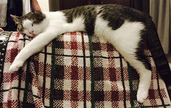 【怪奇物語】「趴在傘上的貓咪」好治癒!日本貓奴的小發明讓下雨天的心情也變好
