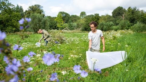 vondelpark amsterdam expeditie dieren nieuwe diersoort ontdekt kever insecten vangen beatles net vlindernet gras