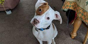 Facebook – Ivor the Deaf Dog's Fun Page