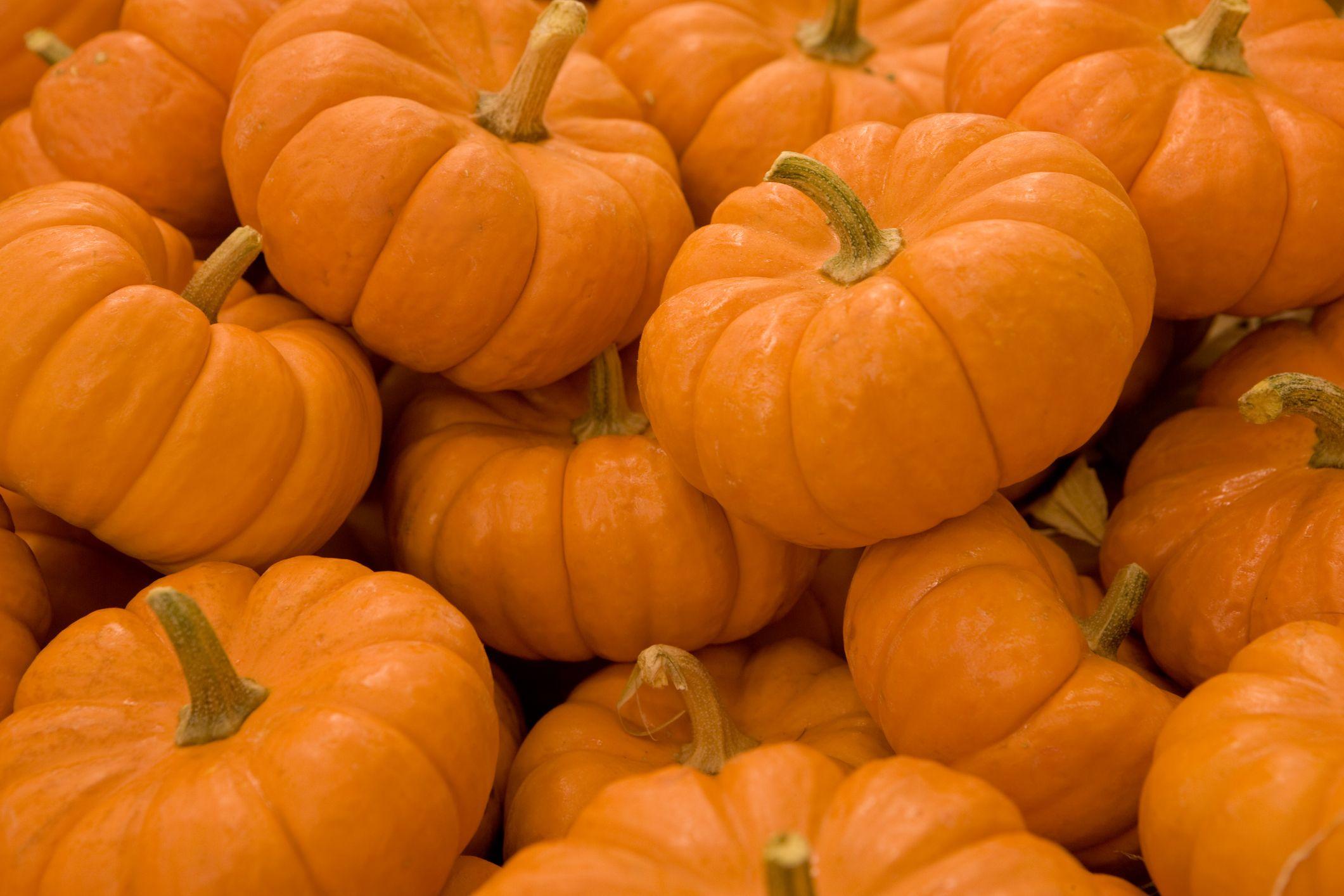 16 Pumpkin Fun Facts Nutrition And Weird Information About Pumpkins