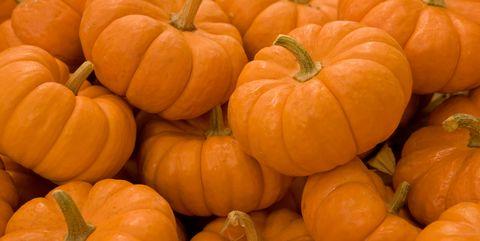 0863cd9af68 16 Pumpkin Fun Facts - Nutrition and Weird Information About Pumpkins