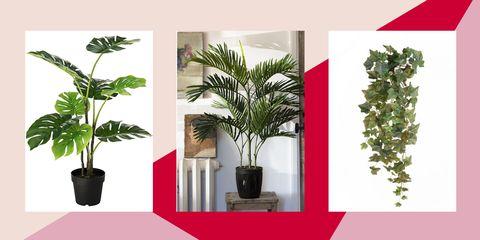 Flowerpot, Houseplant, Plant, Leaf, Flower, Botany, Tree, Grass, Font, Evergreen,