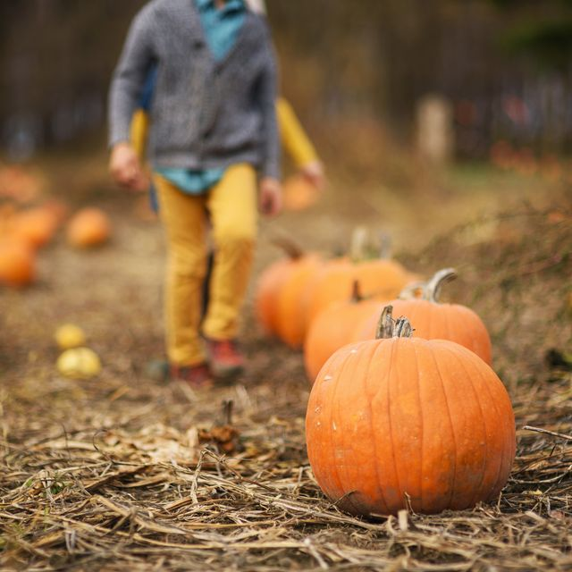 60 Fun Fall Activities For Families Fall Bucket List