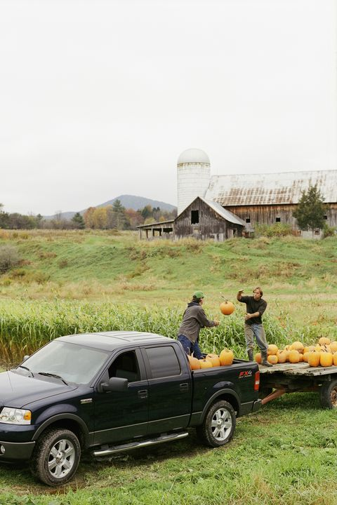 fall bucket list pumpkin farm