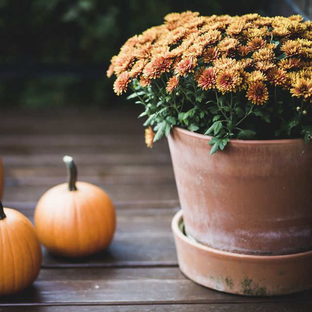 fall flowers for pots containers