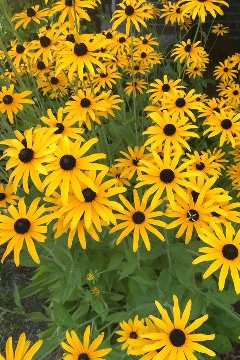 25 Best Fall Flowers To Plant Pretty Fall Plants Flowering