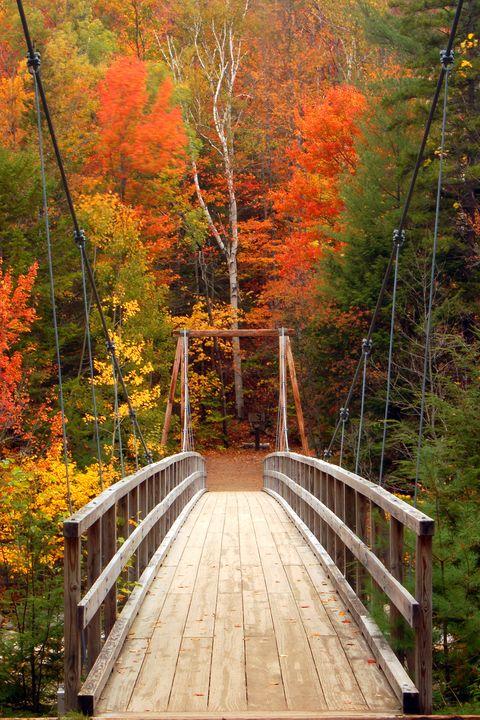 fall foliage fall activities
