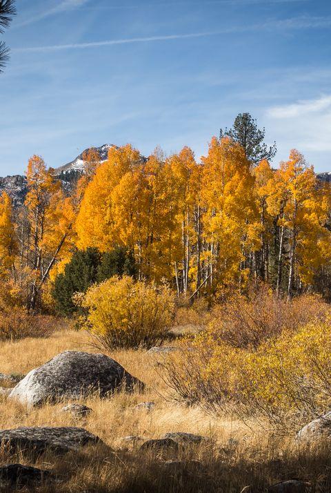 fall leaf hope valley south lake tahoe