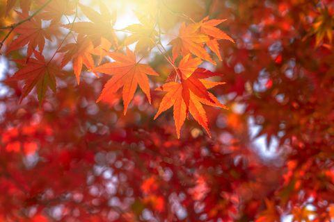 HAPPY AUTUMNAL EQUINOX 2019 Fall-leaves-autumn-equinox-1565380962
