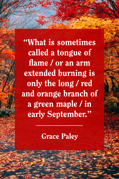Vegetation, Deciduous, Branch, Red, Leaf, Text, Natural landscape, Orange, Colorfulness, Autumn,