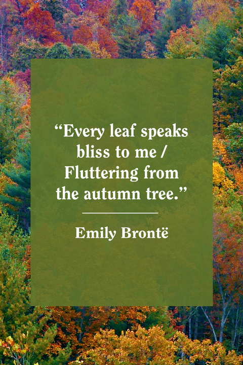 55 Best Fall Quotes 2020 - Inspirational Autumn Quotes for ...